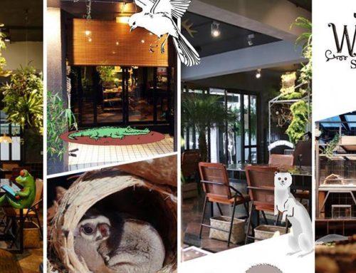 超酷生態餐廳!〈微迷野林〉讓親子近距離共學自然知識