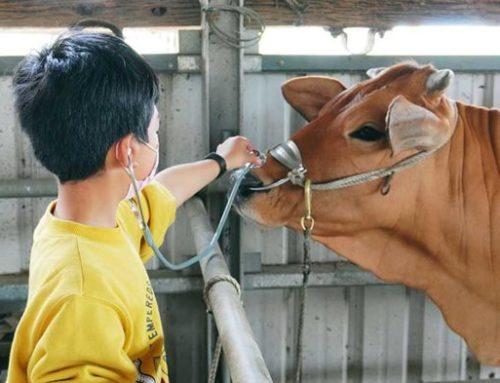 COW 近一點點!傳統農村生活親子半日遊