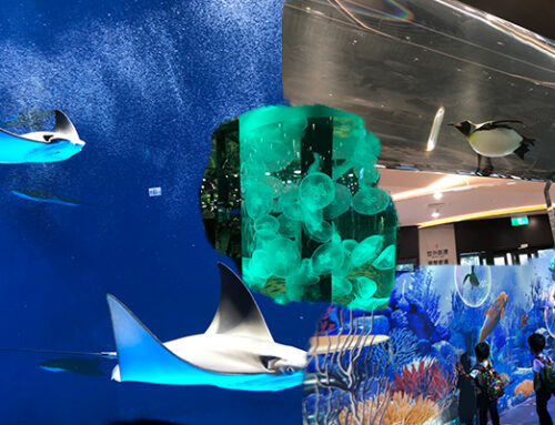 帶你一睹日本跨海來台的水生公園-Xpark
